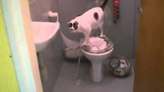 Чистюля или Как приучить кота к унитазу?!