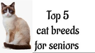 Top 5 cat breeds for seniors | ○○○○○○○| cat | X SILVER POWERS