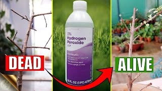 HOW TO CORRECTLY USE HYDROGEN PEROXIDE IN YOUR GARDEN?