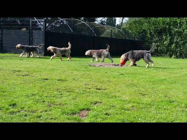 De Kweb Otterhounds
