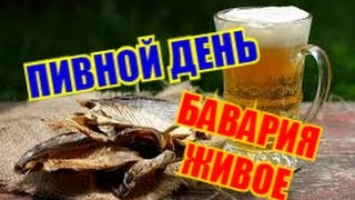 """Пью пиво""""Бавария живое"""" с вяленой плотвой..."""