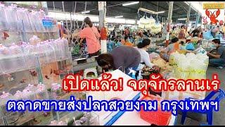 เปิดแล้ว! จตุจักรลานเร่ ตลาดขายส่ง ปลาสวยงาม ข้างห้างเจเจมอล์ล กรุงเทพฯ  13 พ.ค.63