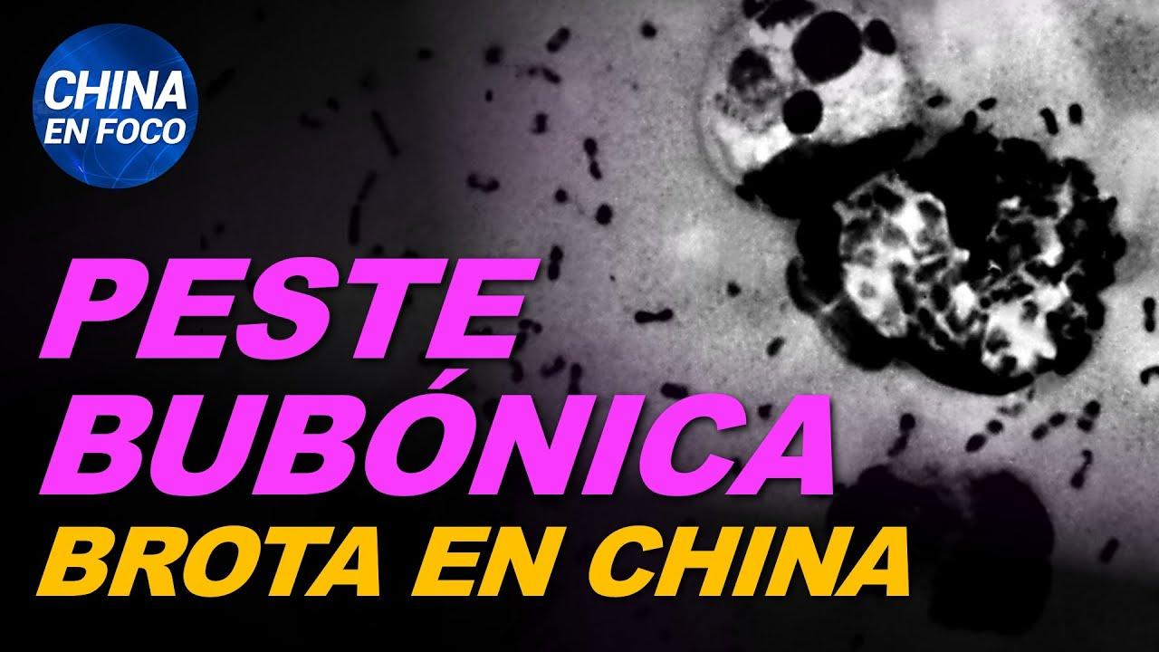 Brote de peste bubónica resurge en China y autoridades dan la voz de alarma | China en Foco