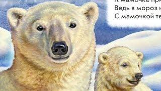 Стихи про диких животных (медведя, дельфина, павлина)