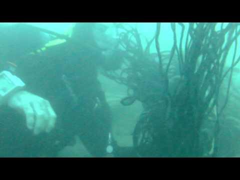Submarine Cable Survey