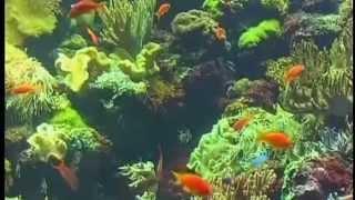 Непутевые заметки, Дмитрий Крылов (Канары, Тенерифе)(Канарские острова - элитный мировой курорт, мировое наследие ЮНЕСКО уникальная природа, одна из лучших..., 2012-03-10T11:05:39.000Z)
