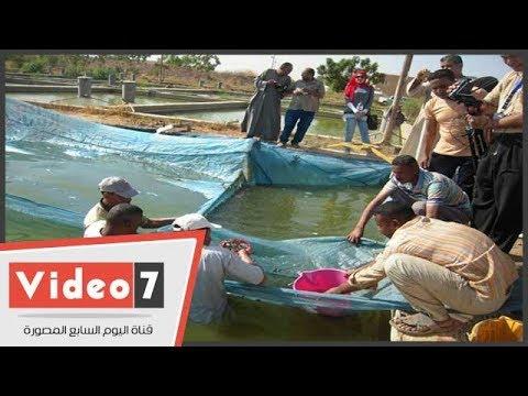 اليوم السابع :إطلاق 7 ملايين ذريعة سمكية فى بحيرة ناصر بأسوان