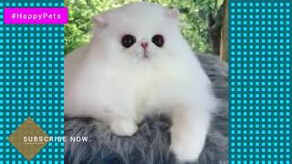 Funniest Cute Cats Compilation 2019 | Cute is More than Enough | HappyPets #19