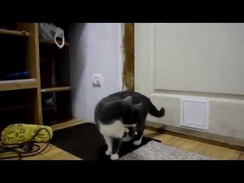 Дверца для кошек в дверь своими руками видео