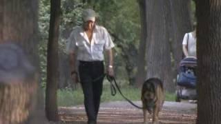 Ветеринары не советуют стричь и купать собак в жару