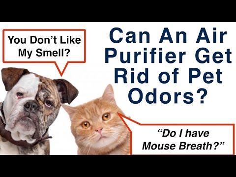 Best Pet Odor Air Purifier Reviews
