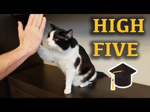 "Lesson: ""Give me high five"""