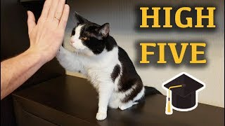 Lesson: 'Give me high five'