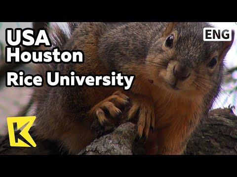 【K】USA Travel-Houston[미국 여행-휴스턴]미국 남부의 명문, 라이스 대학교/Houston/Rice University/Robert Hall/Rice