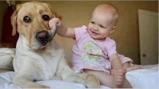 Funny Videos   Babies Laughing at Dogs   Cute dog & baby compilation