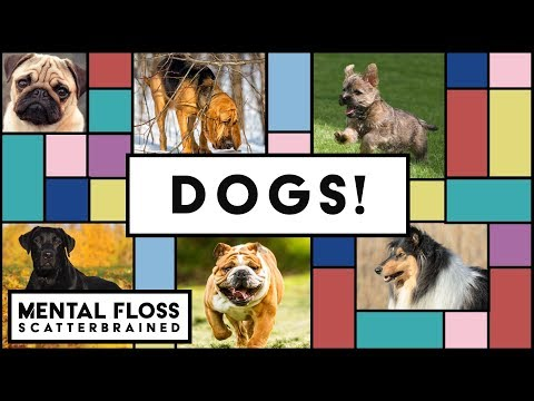 Dogs Can Smell Fear! And Other Dog Facts  Mental Floss Scatterbrained