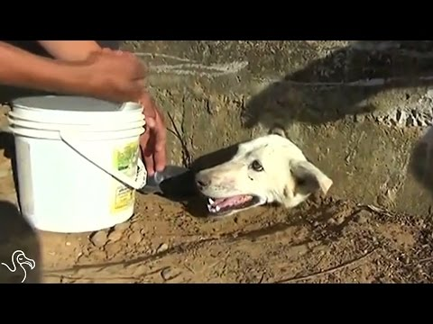 Dog Whose Head Got Stuck In Wall Gets Dramatic Rescue