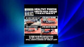 Pigeon medicine India treatment for all disease