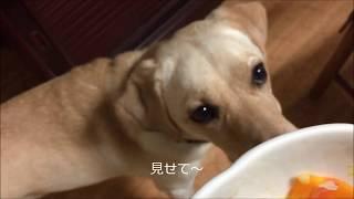 ペットのごはんのアドバイザー『犬めし亭』による手作り食.