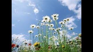Разнообразие растений. Биология 5 класс