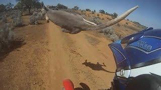 Motos vs Canguros 2018