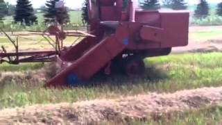 Allis-Chalmers WD and All-Crop Harvester combining wheat