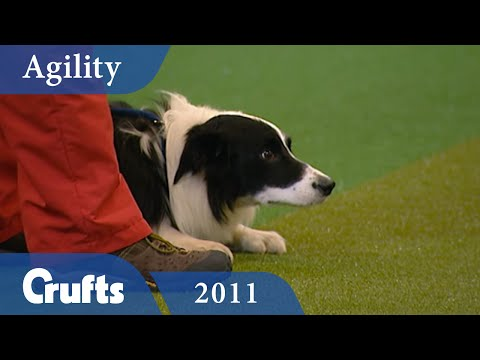 Agility - Championship Final 2011 | Crufts Dog Show