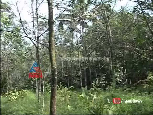 Rubber farmers turns to other farming Chuttuvattom News