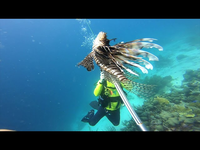 AMAZING OCEAN LIFE IN ARUBA & SOME LIONFISH REMOVALS
