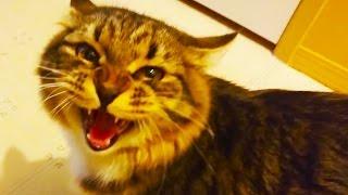 cat argues