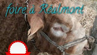 Foire à Réalmont