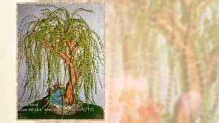Деревья из бисера  Плакучая ива