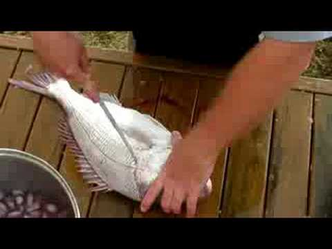 How to Fillet a Snapper