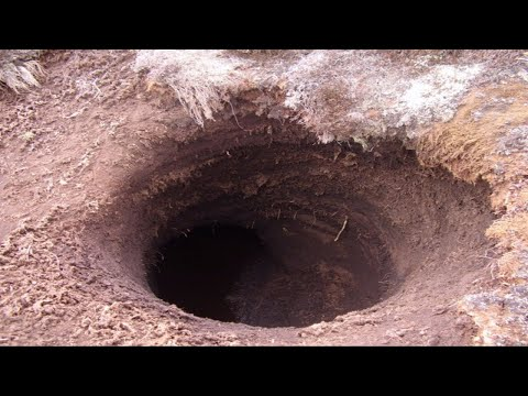 Digging HOLES Found MONSTER Larvae! Metal Detecting 1886 Farmhouse LIVE!