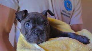 puppy-bubble-bath-bully-update