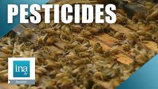 Les abeilles menacées par un insecticide : le gaucho | Archive INA
