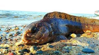 ТРЕСКА/Рыбалка в Белом море/Хороший клёв