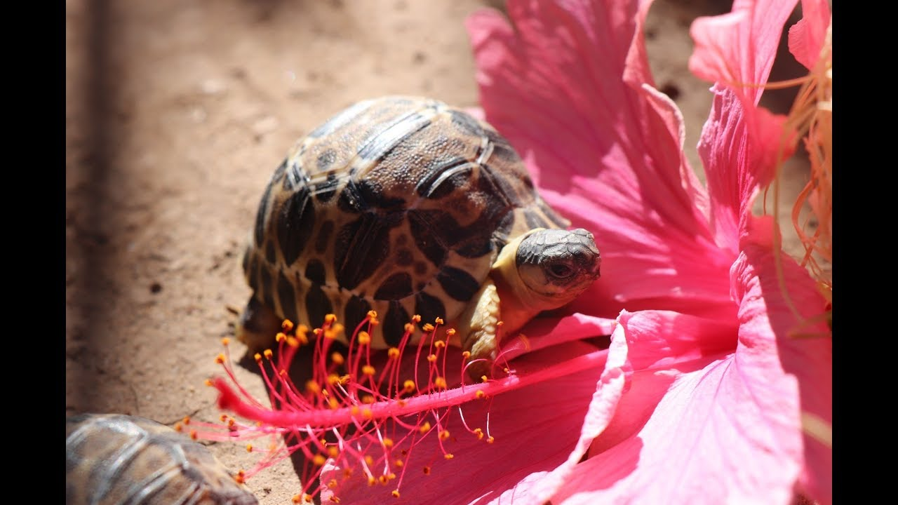 Watch These Cute Little Tortoises Born In The Cape Could Save An