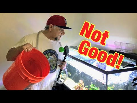 Top 5 Aquarium Water Change Disasters - Don't Let These Happen!
