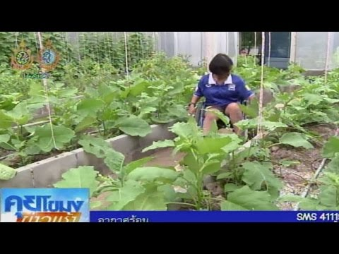 เกษตรสร้างชาติ : เกษตรบำบัด