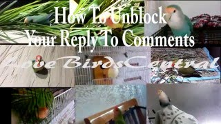 How To Unblock Your Reply To Comments | LoveBirdsCentral #62