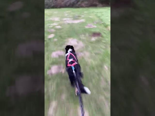 Taya beim Carnicrossüben