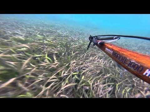 Spear Fishing Tumby Reef South Australia
