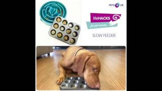 Life Hacks For Pet Owners: DIY Slow Feeder