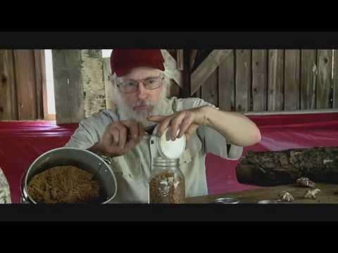 Life Cycle of a Shiitake Mushroom