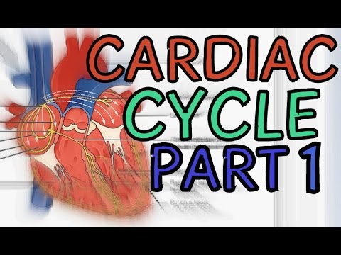 Biology Help The Cardiac Cycle