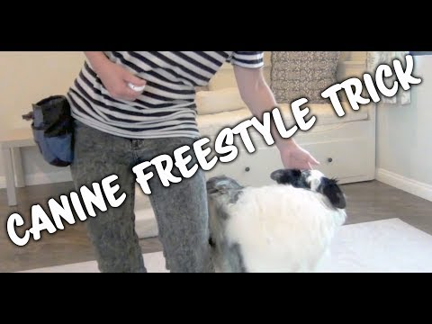 How to teach Canine Freestyle head movement - dog training tricks