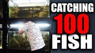 CATCHING 100 AQUARIUM FISH