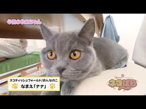ネコぱら 今日のネコちゃん #9 ナナちゃん