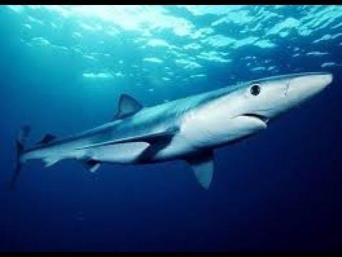 кистеперые рыбы. фото